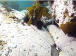 接食された海藻